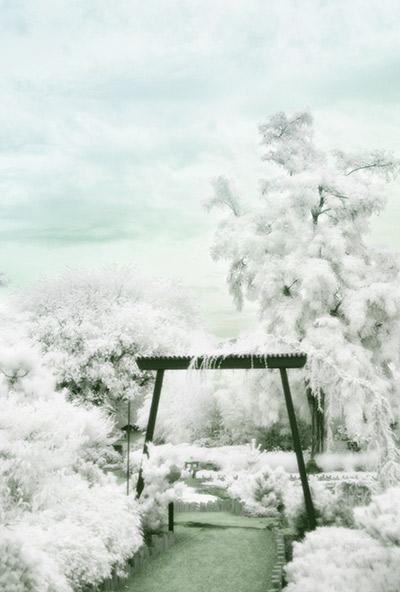 digital infrared park scene
