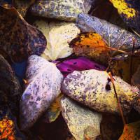 Autumn Colours, or 50 shades of orange